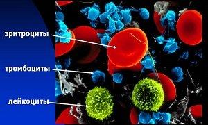 Биологический анализ крови