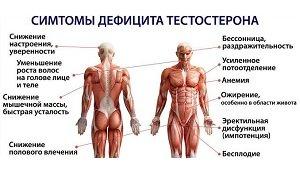 Чем поднять тестостерон у мужчин