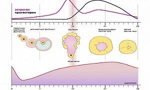 Прогестерон что это такое значение гормона и норма в организме