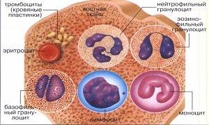 Развернутый анализ крови расшифровка у взрослых