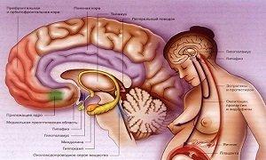 Как влияет пролактин на организм женщины