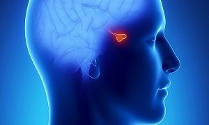 Содержание пролактина у мужчин в норме и при патологии