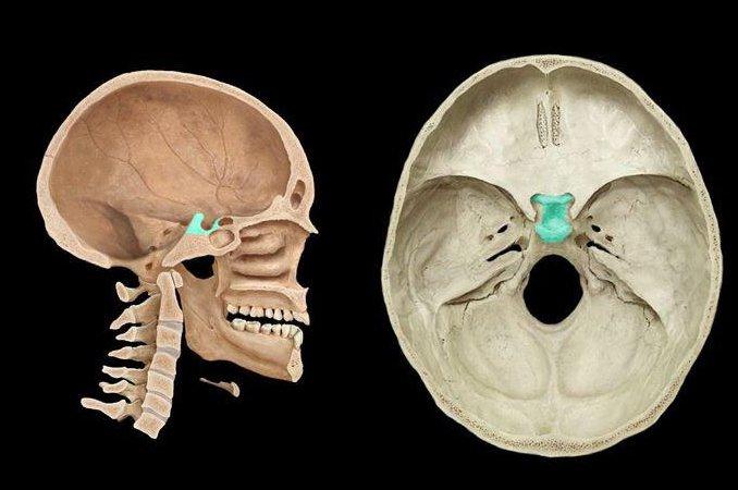 Турецкое седло головного мозга: что это такое, лечение и признаки формирующегося пустого