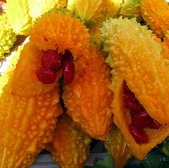 Размножение момордики семенами